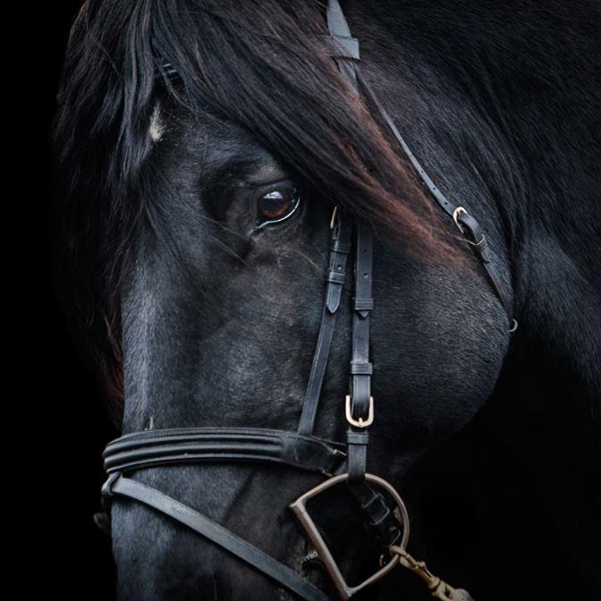 HORSE GENETIC IDENTIFICATION